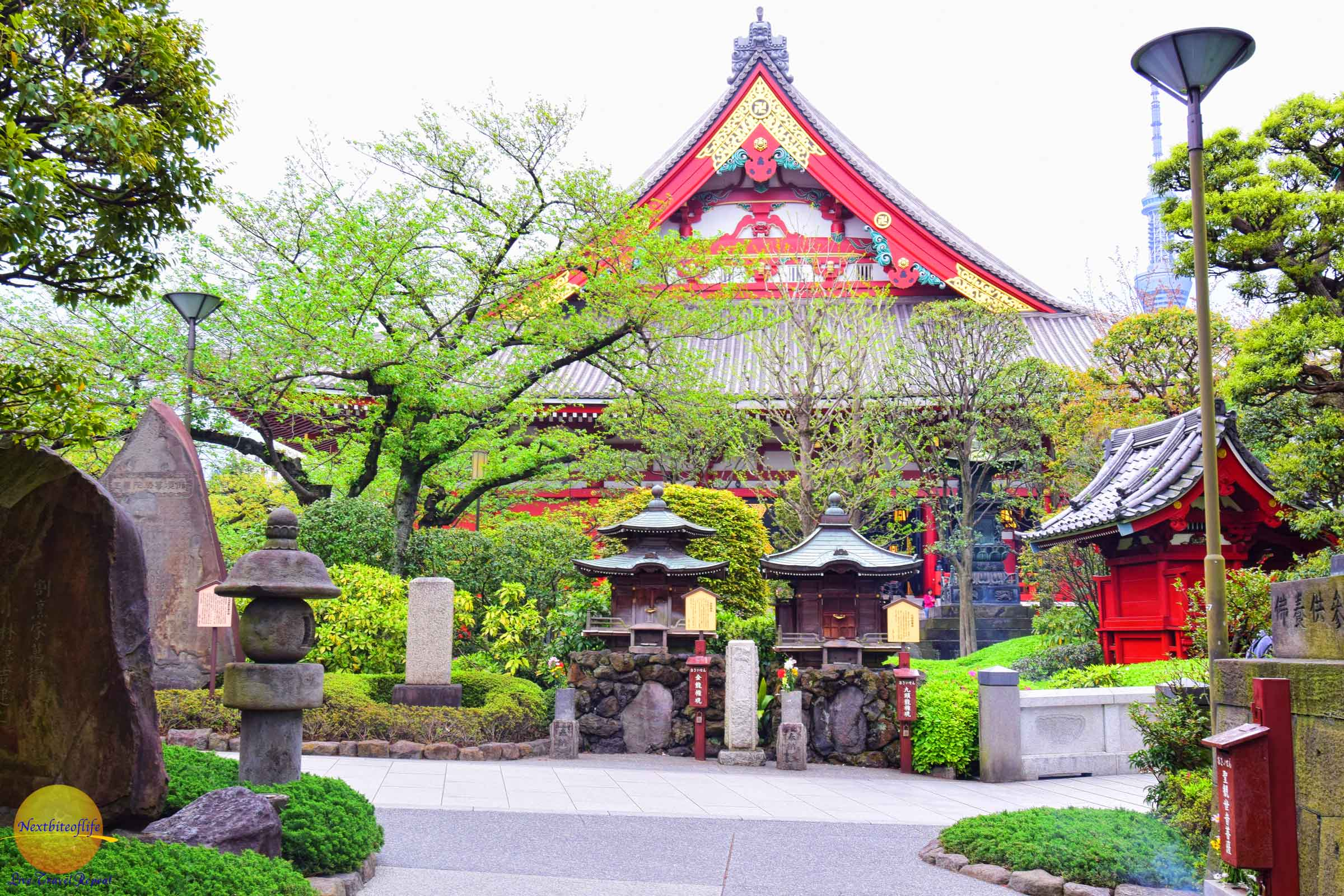 A little greenery at the Sensoji Temple in Asakusa prefecture, Tokyo, Japan