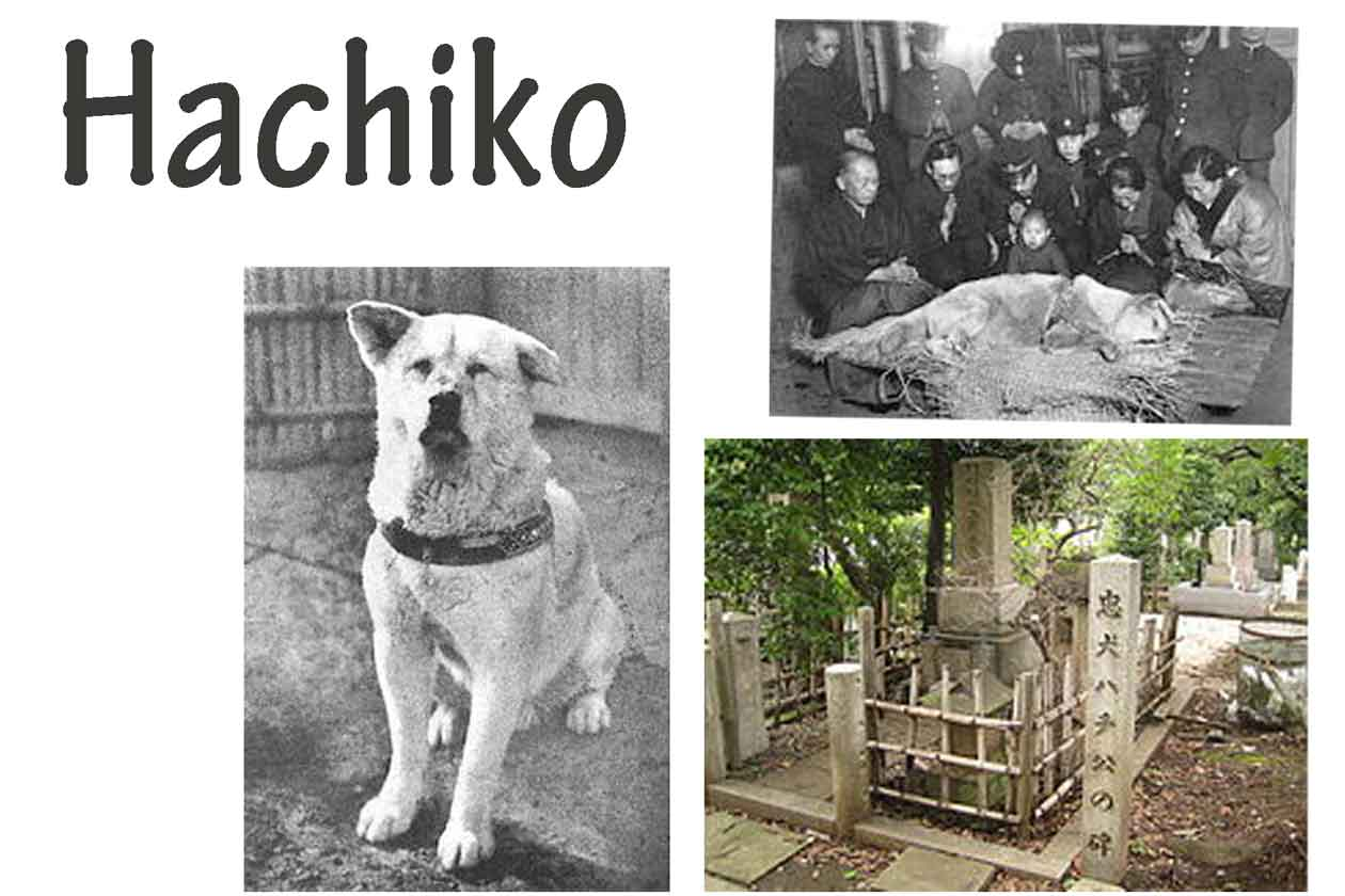 Last Days Of Dog S Life