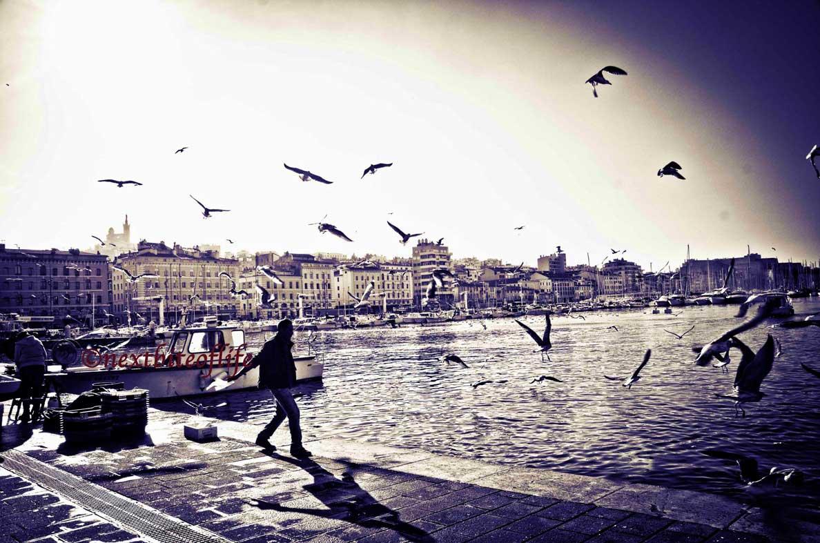 fisherman chasing birds marseille old port