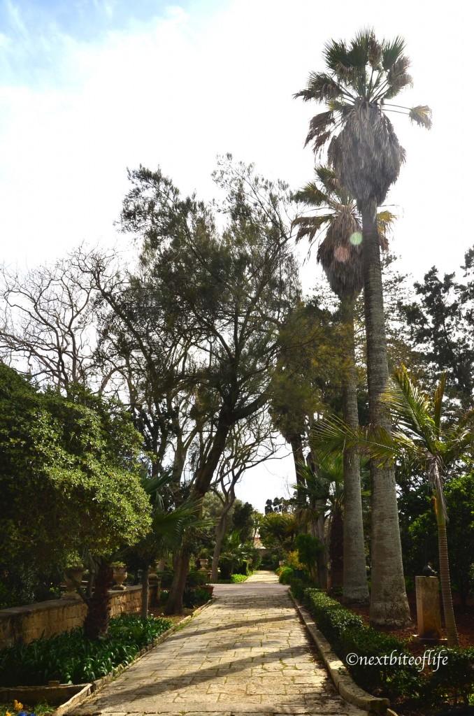 Tree lined street at the San Anton Gardens Malta