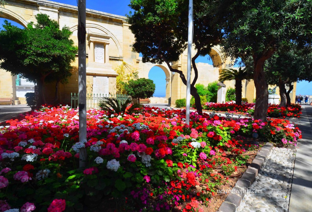 flowers blooming in valletta