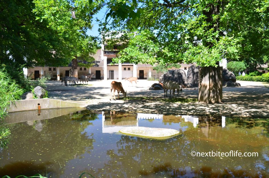 Berlin Zoo and Pergamon Museum visit