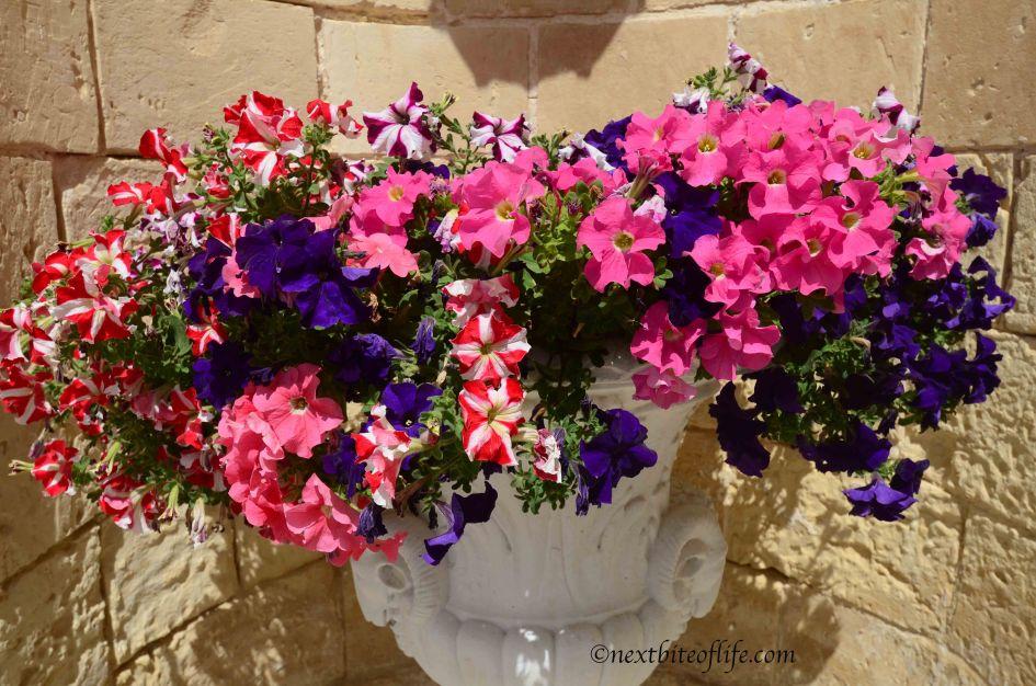 blooming flowers at Pariso palazzo Malta