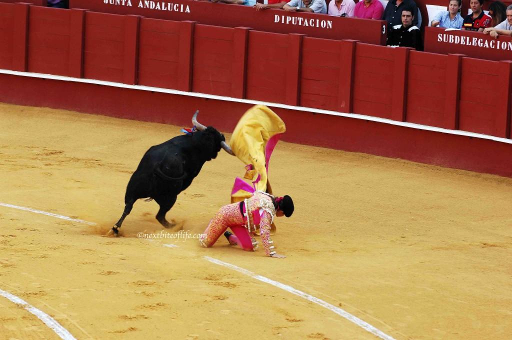 Down went the torador at spanish bullfight