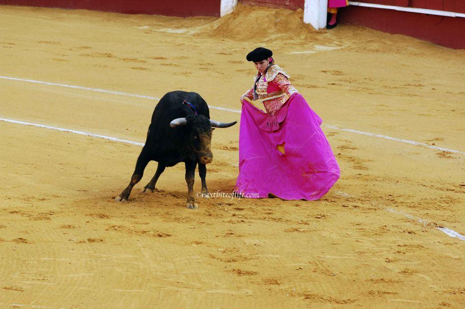matador with cape taunting bull