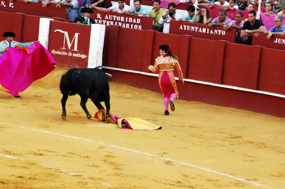 toreador female running from bull while another tries to distract the bull with cpae