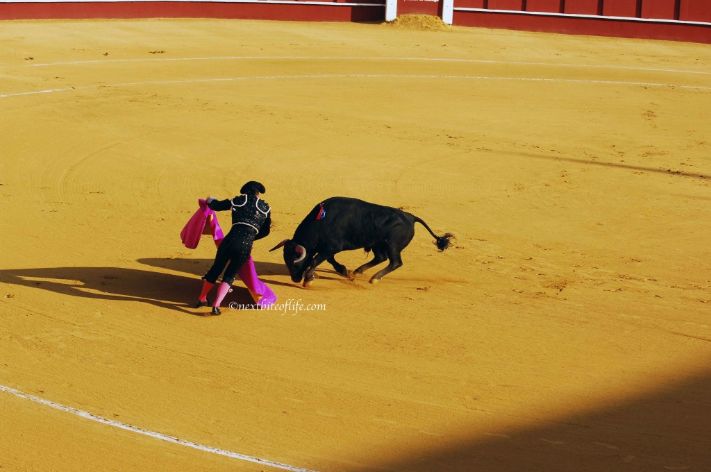 toreador and bull