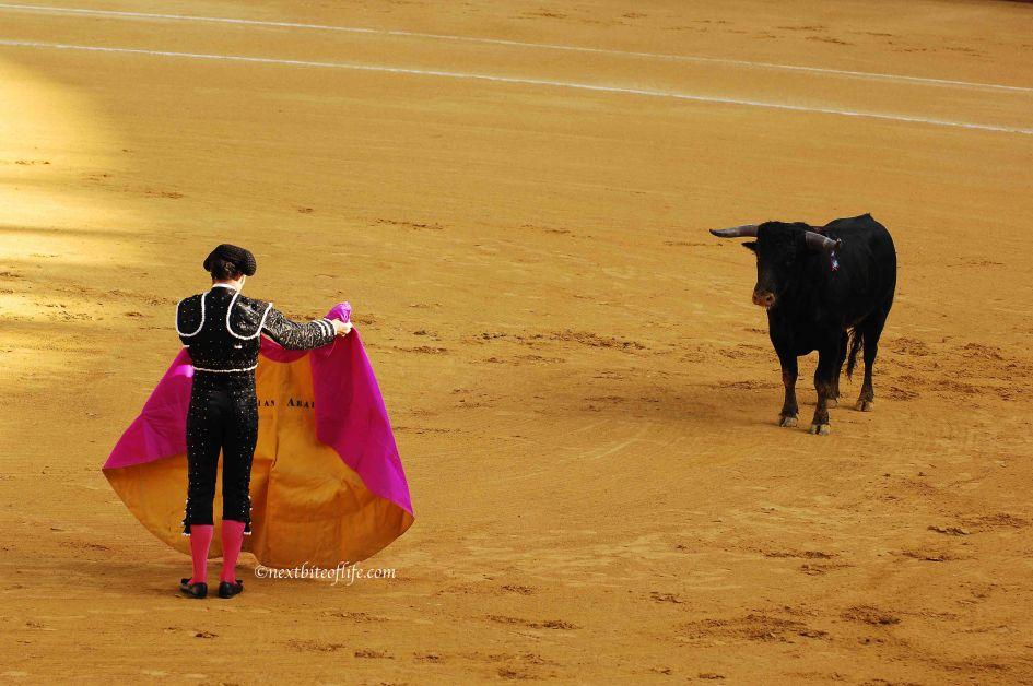 Rescuer toreador distracting bull