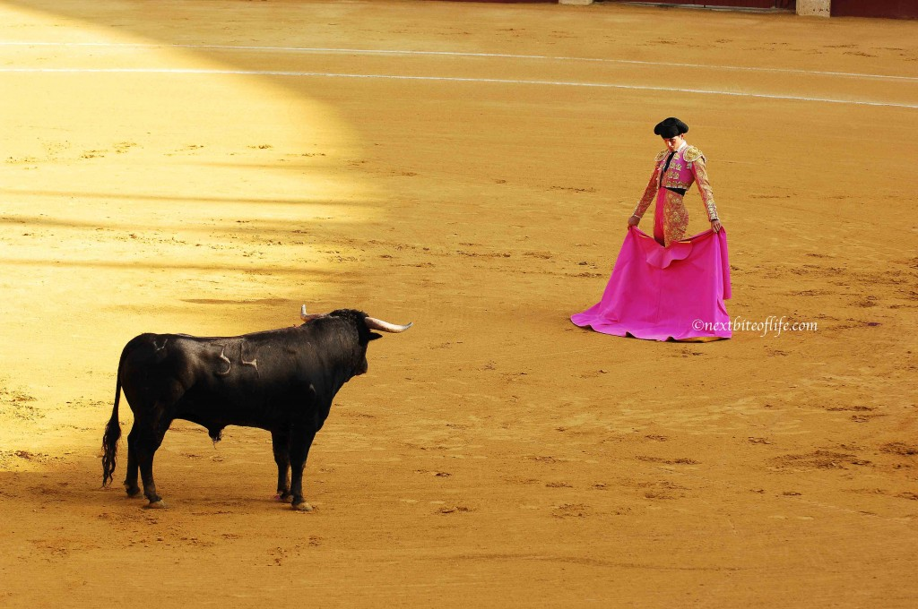 Matador malaga spain and bull