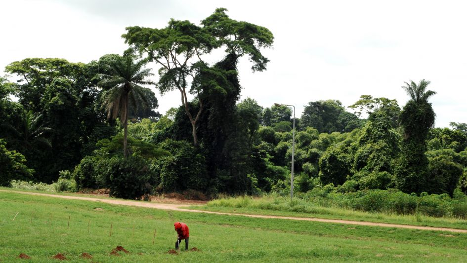 A farmer is hoeing and planting seeds on a green field in Ibadan Nigeria