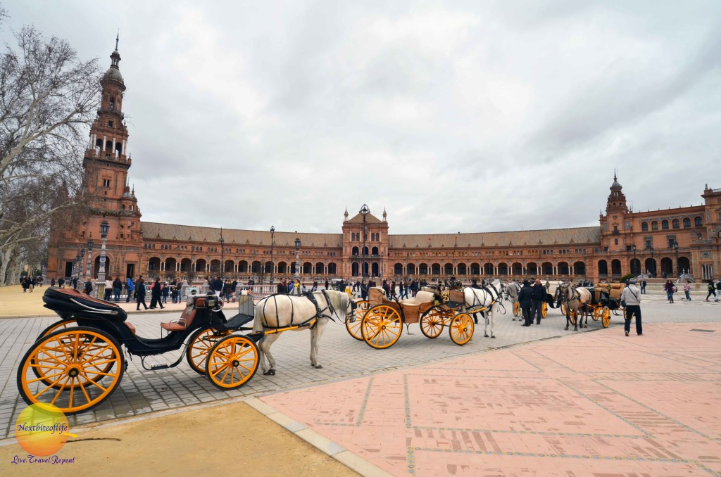 Carriage rides offered at plaza de espana seville.