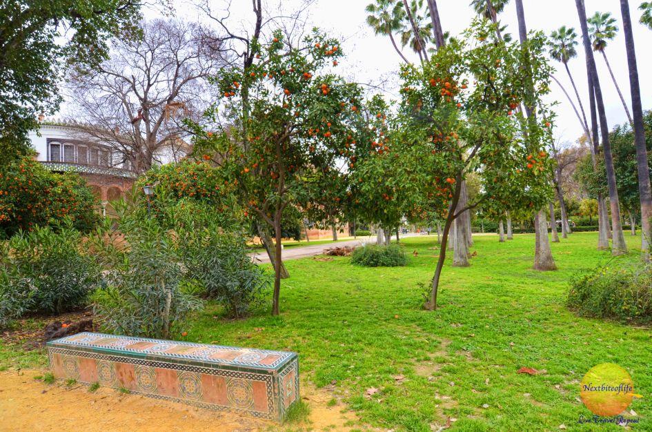 bench maria luisa park seville