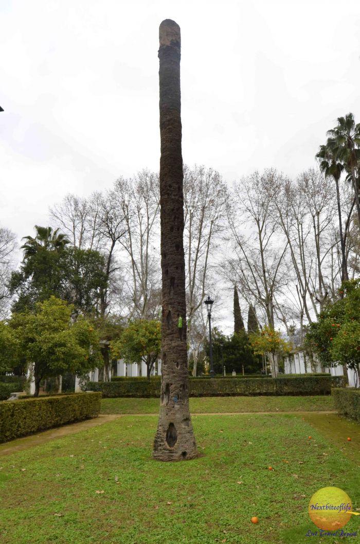 hollow tree maria luisa park seville #visitseville #marialuisapark #park #seville #spain