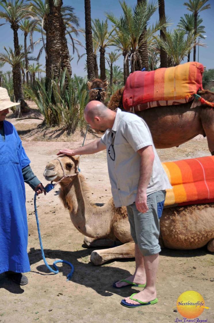 petting a camel in agdal gardens marrakech #agdalgardens #marrakech