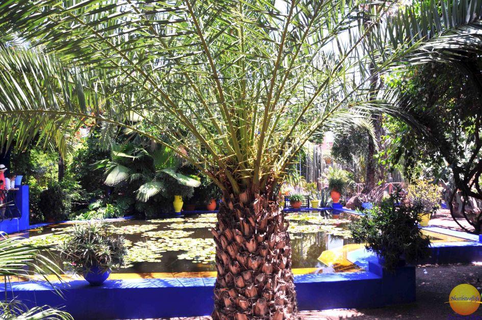Marrakesh majorelle garden
