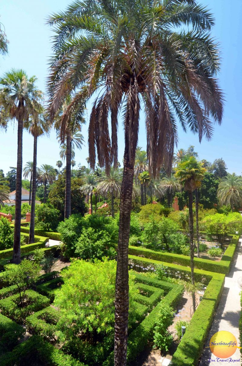 alcazar gardens in Seville with manicured lawns and palm trees
