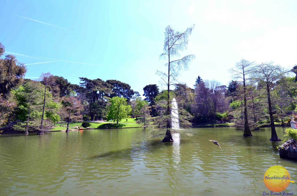 So many ponds at el retiro park