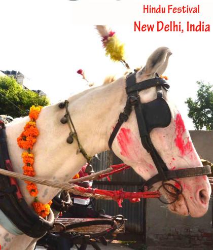 horse at Hindu festival with flowers #hindufestival #newdelhi #visitdelhi