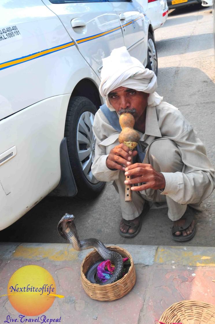 snake charmer in new delhi india