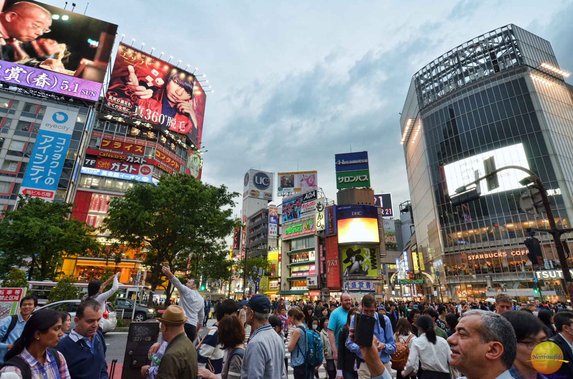 Shibuya District in Tokyo and a dog's tale