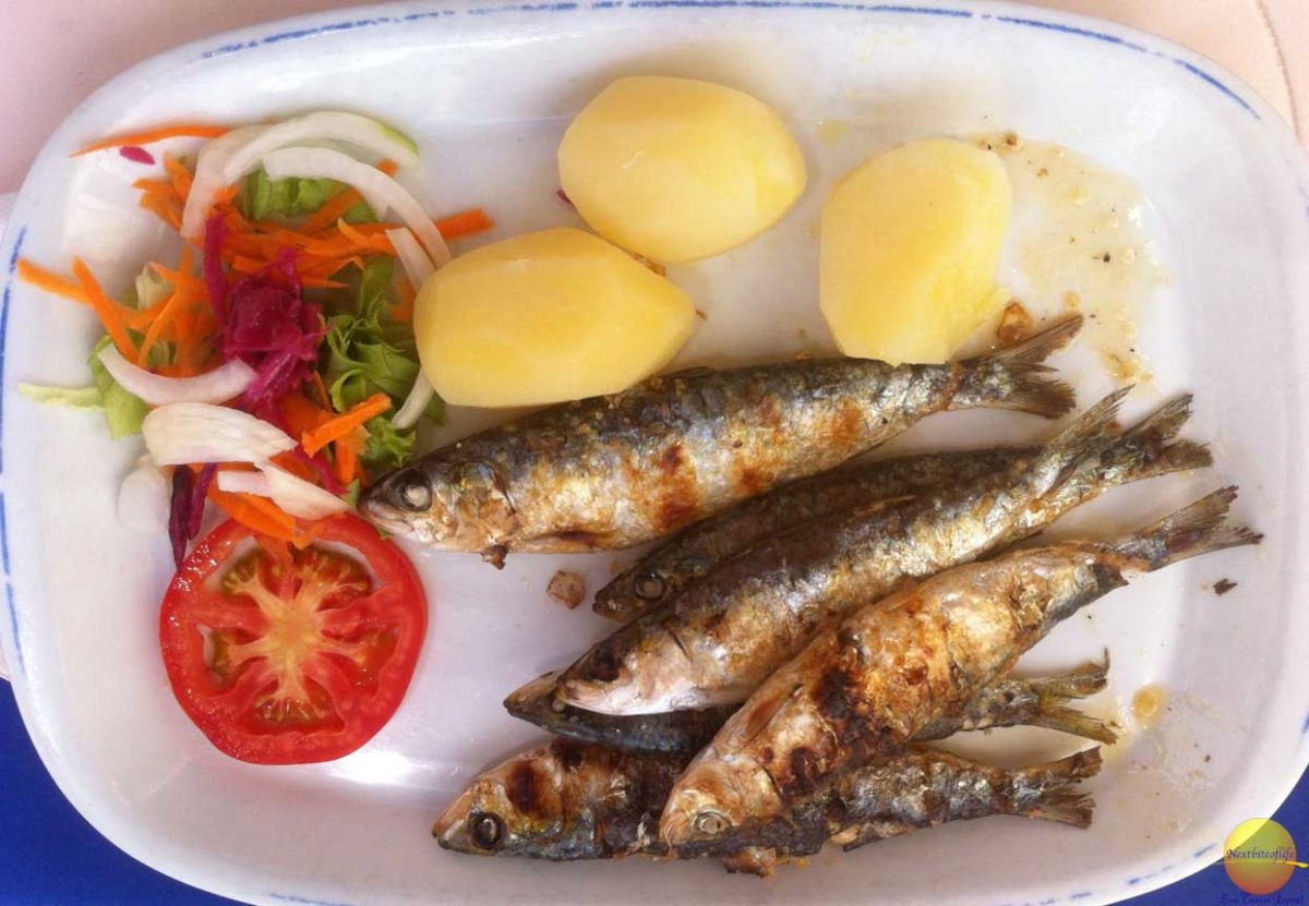 lagos portugal awesome sardines