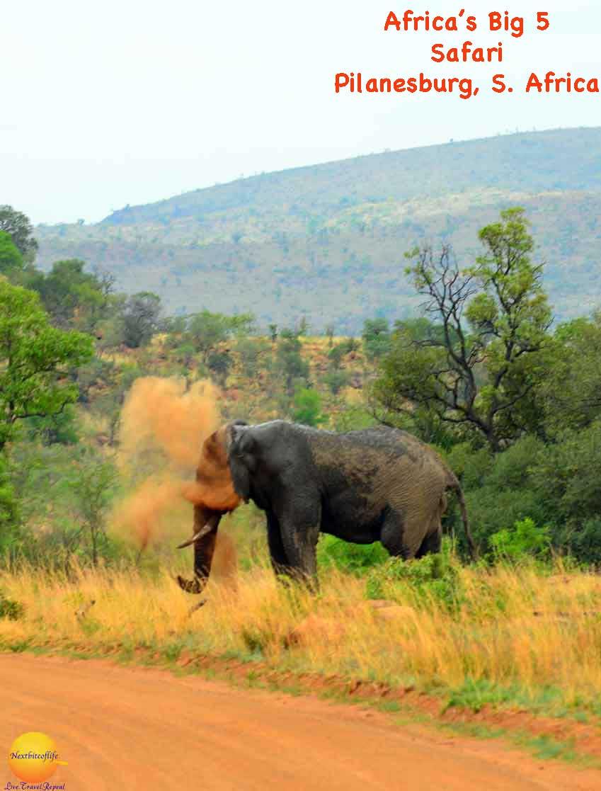 pilanesburg park elephant sand bath