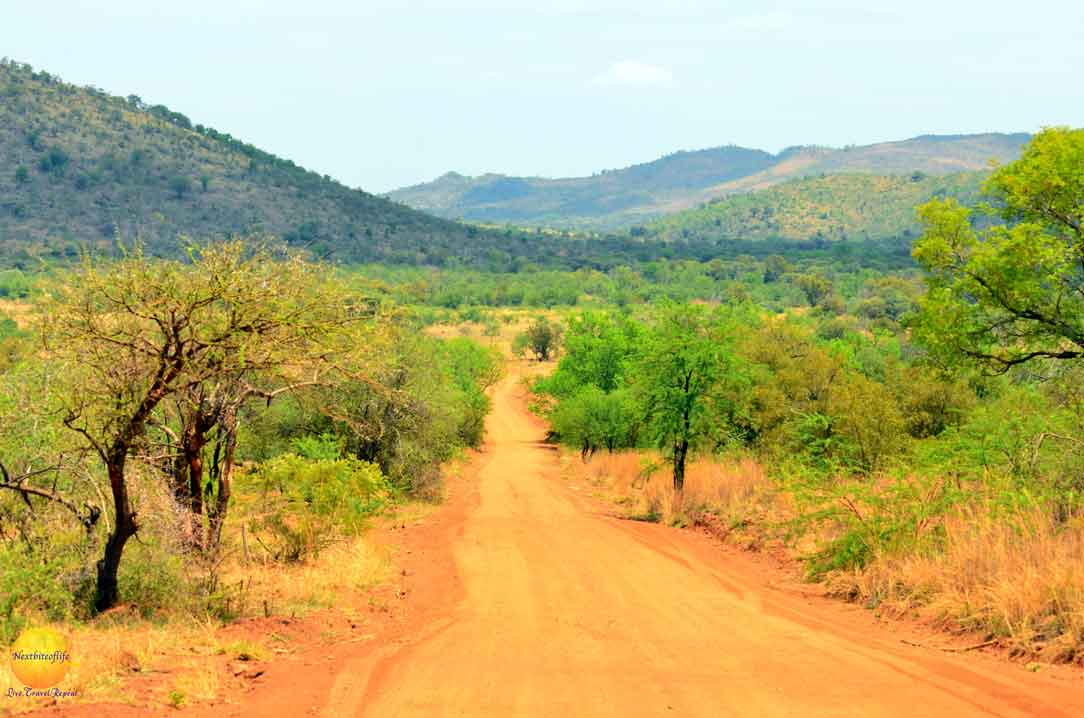 how successful was our big 5 african safari land