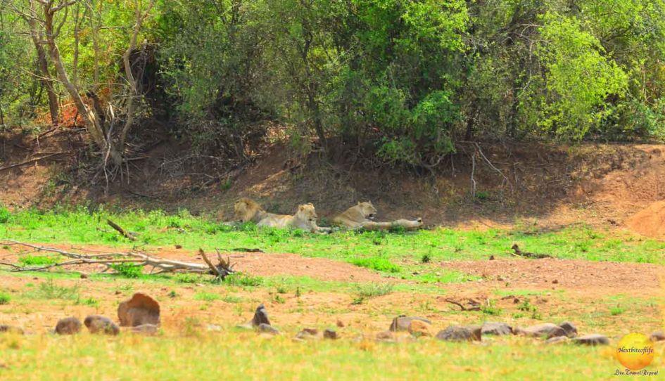 pilanesberg park lions African safari big 5 search