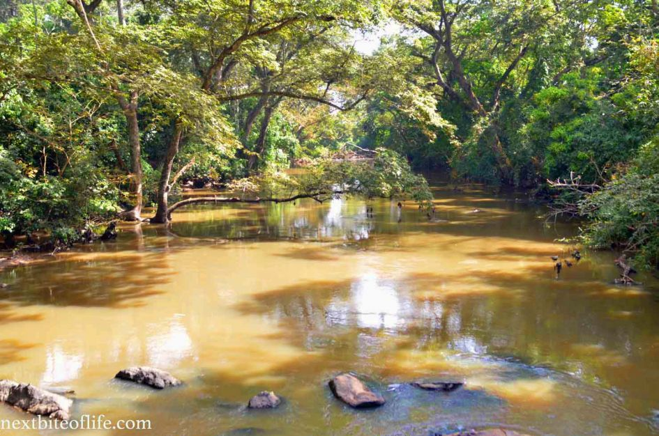 osun river view from the osogbo sacred grove