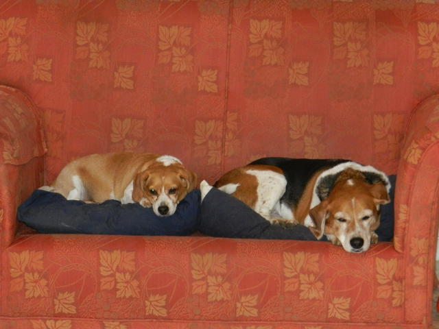 flat hunting in Spain sucks -most don't allow pets like these 2 dogs on couch sleeping