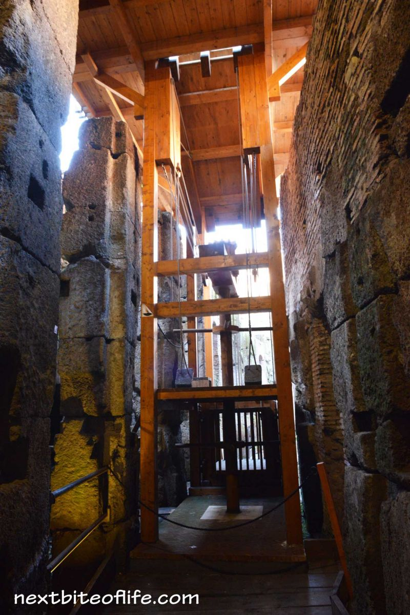 During our Colosseum Roman Forum Palatine Hill small group tour... here is Colosseum Underground lift for animals Rome