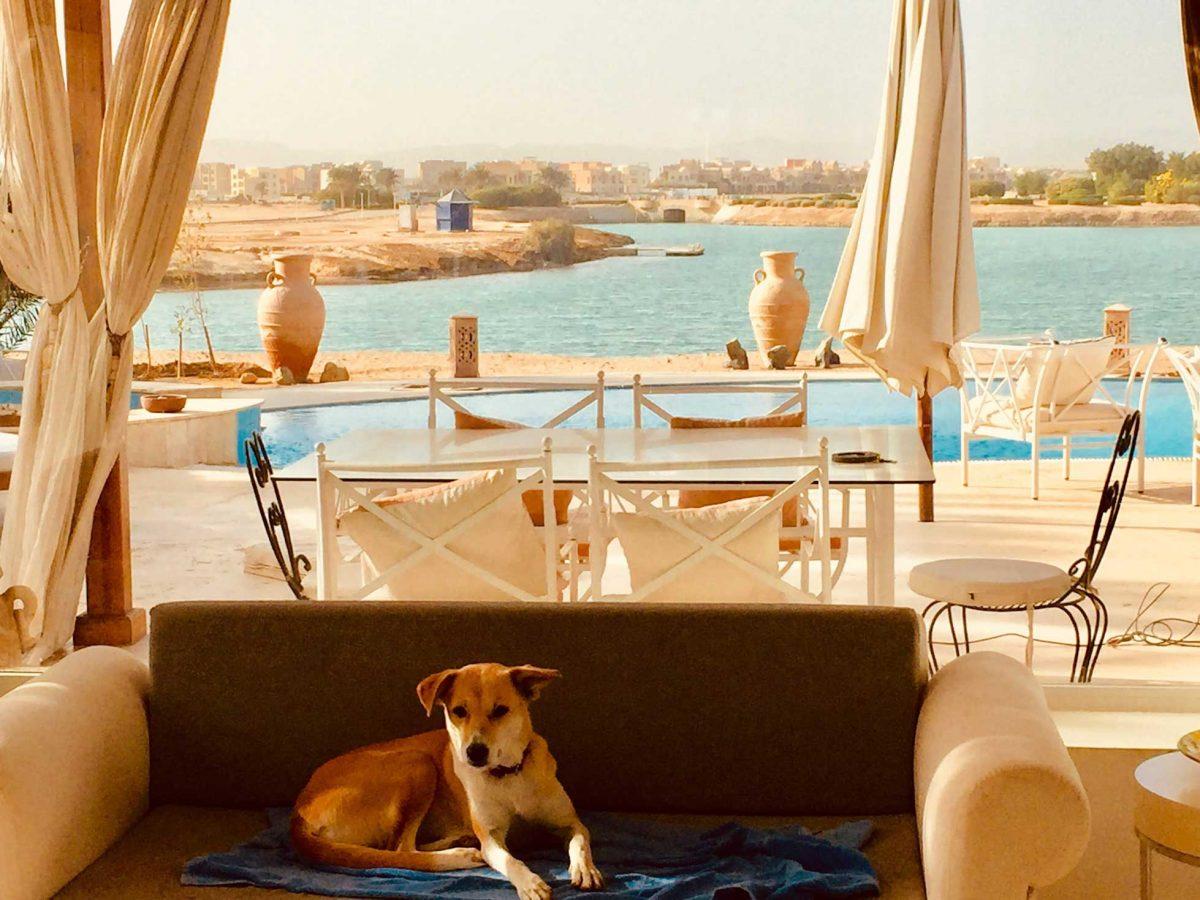 dog sunning in el gouna villa egypt