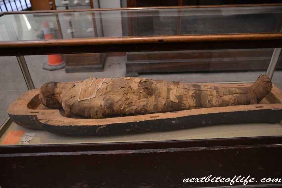 mummified figure at Egyptian museum, a must visit even if you only have 24 hours in Cairo
