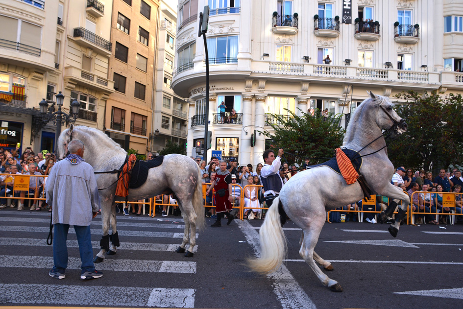 2 horses, one rearing up at the Valencia celebration Nou de Octubre