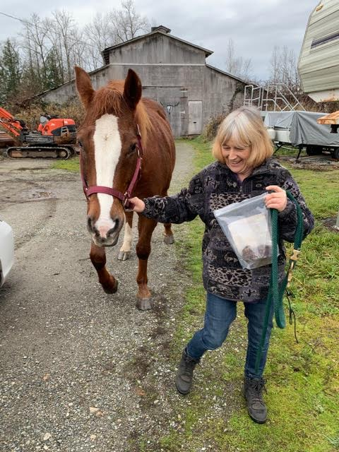 woman leading a brown horse in life in Canada with Cheryl